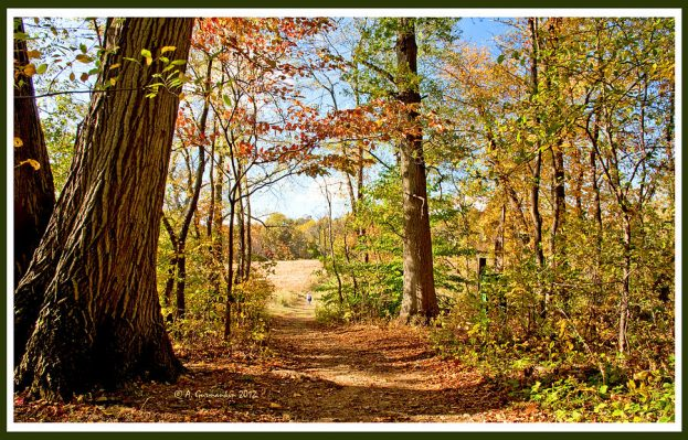 1-path-out-of-the-woods-to-a-meadow-in-autumn-a-gurmankin