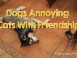 dogs annoying cats